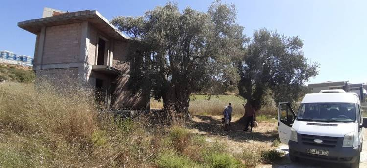 Bin 500 yıllık ağacın yanına yapılan villa yıkıldı