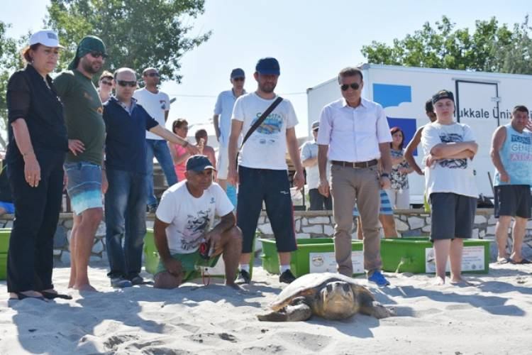 Kaplumbağaların denizle buluşması