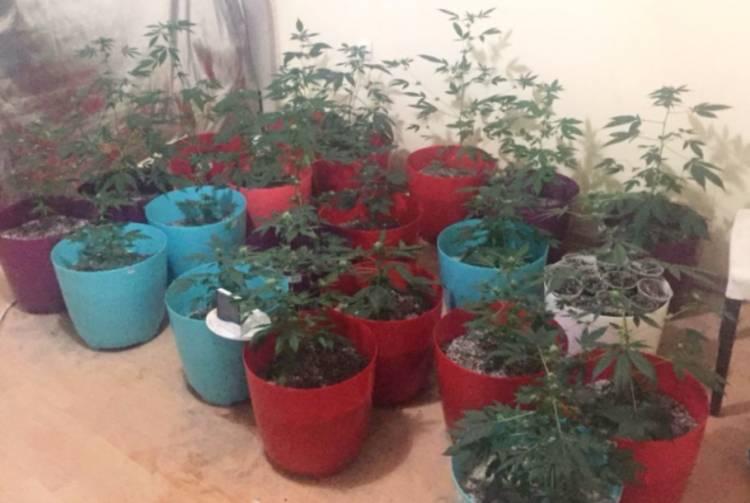 Hırsızlık ve uyuşturucu satıcılığına 3 tutuklama