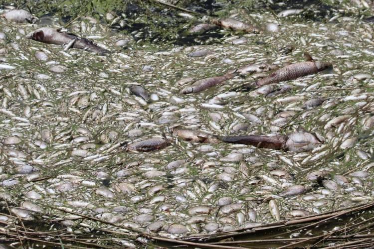 Menderes nehrinde balık ölümleri tedirgin etti